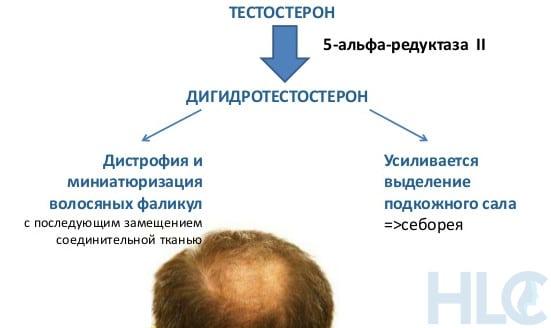 Взаимосвязь 5 Альфа Редуктазы и Дигидростерона